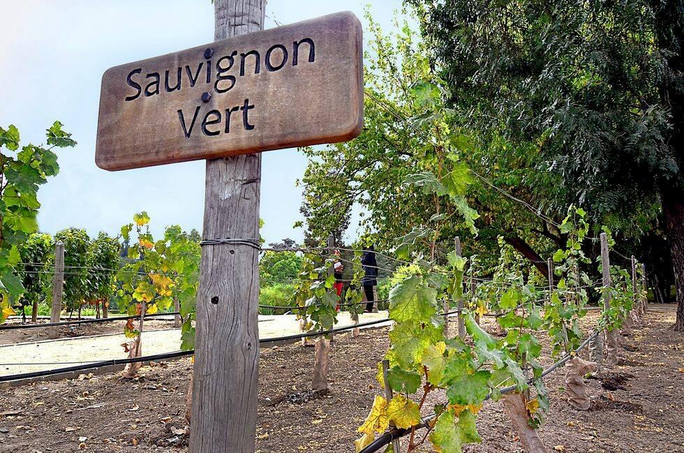 Chiles bästa vingårdar – på besök hos djävulen