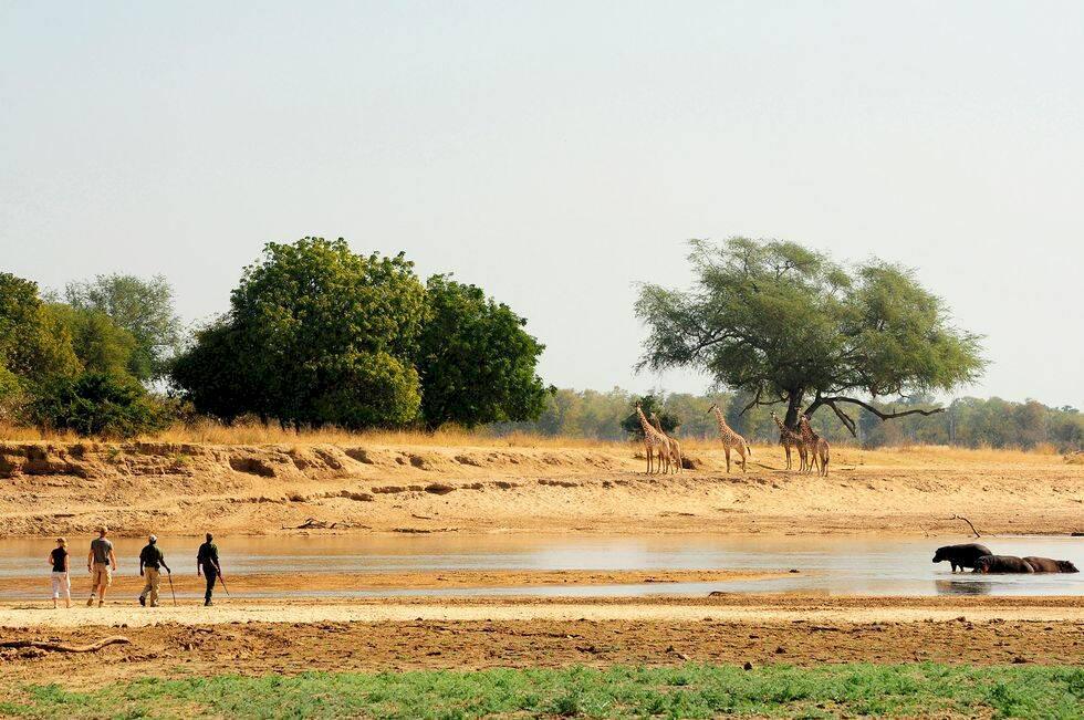 Unika safariresor i Afrika – 10 udda sätt att uppleva djurlivet