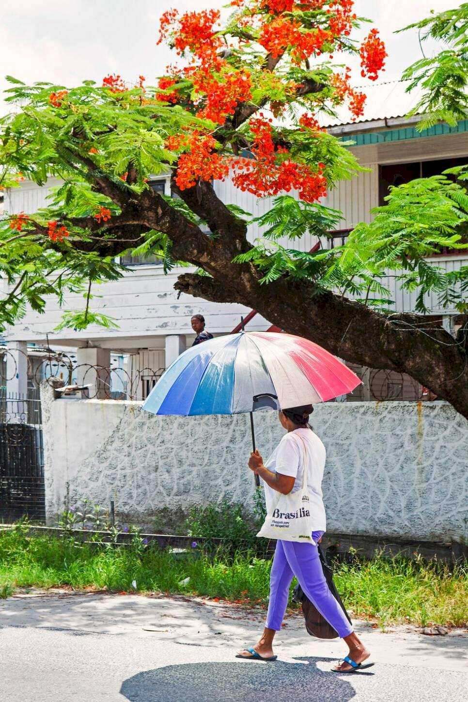 Guyana – Sydamerikas sista hemlighet