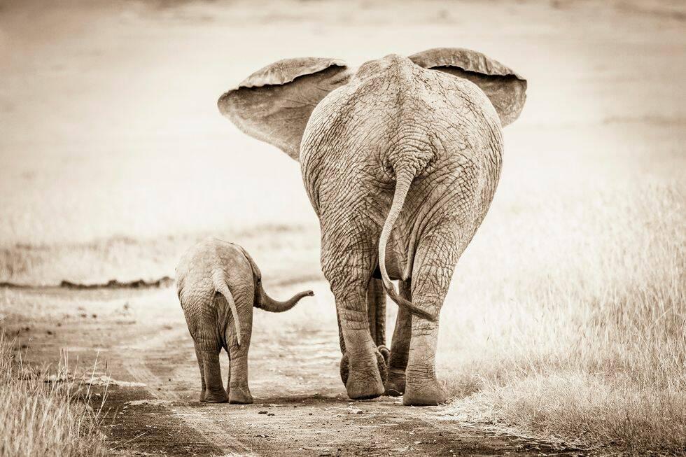 Experten tipsar: Så fotar du vilda djur på resan