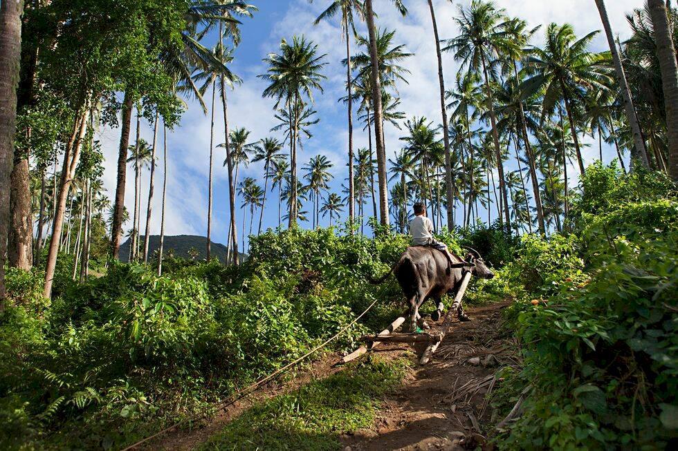 Filippinerna – följ med till okända paradisön Camiguin