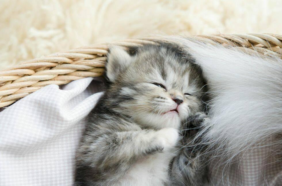 Kattfestival kommer till London nästa sommar