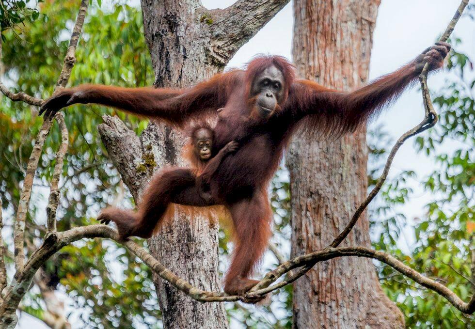 12 magiska djurresor från hela världen
