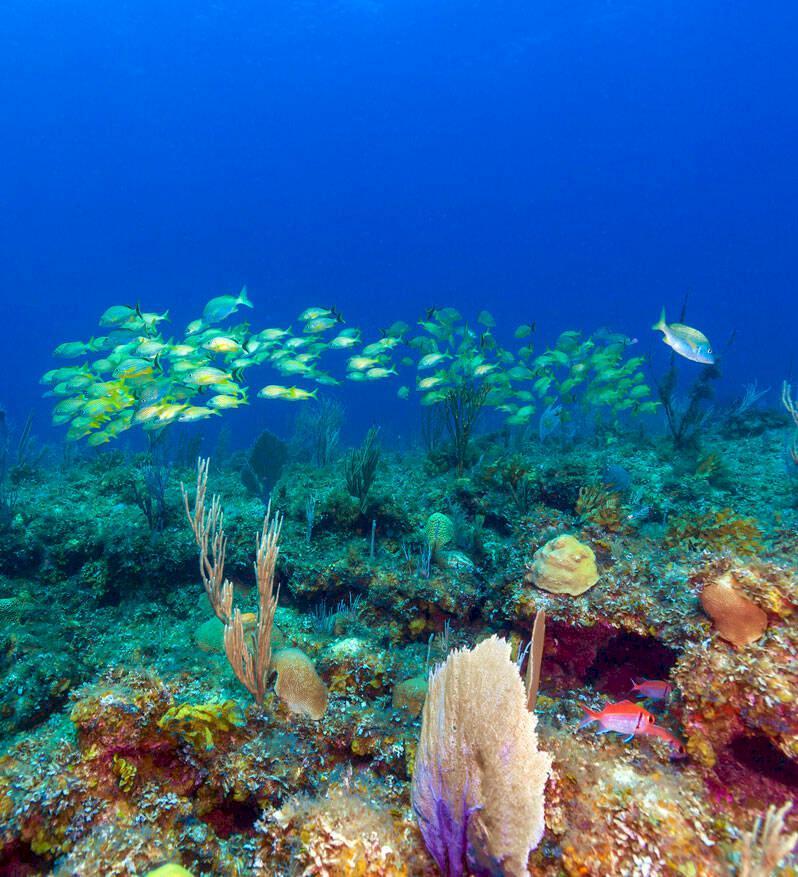 Miniguide: Cayo Largo – Kubas vackra sköldpaddsö