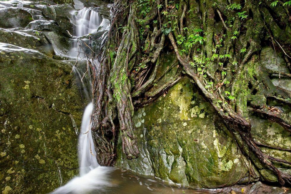 Kaeng Krachan – äventyr i Thailands största regnskog