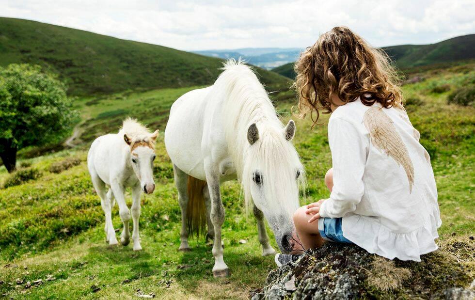 Husbilssemester i England: Förbi trollskogar och kitschiga nöjesparker