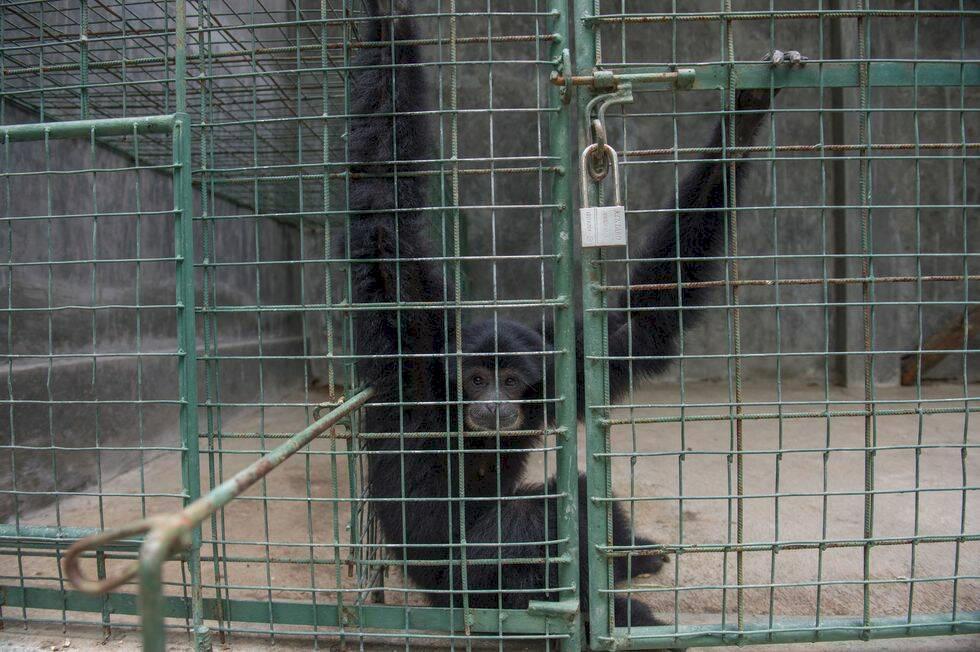 Granskning avslöjar – djur plågas på populära semesterön