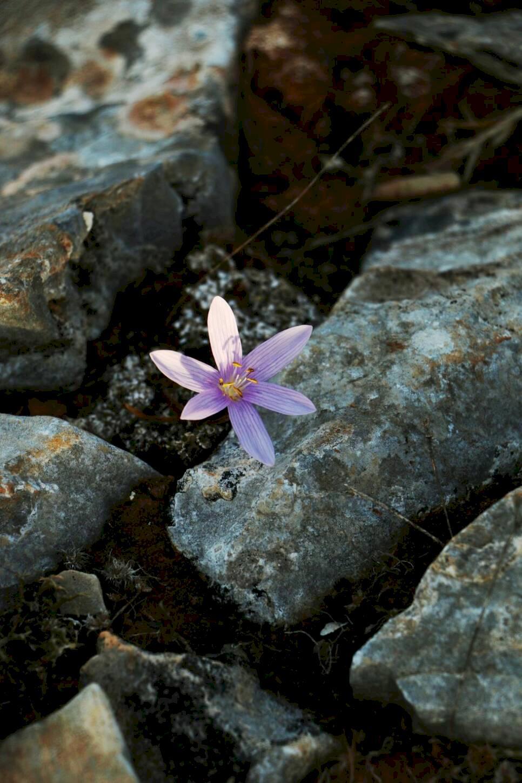 Bland karga klippor och mjuka stränder på Iraklia
