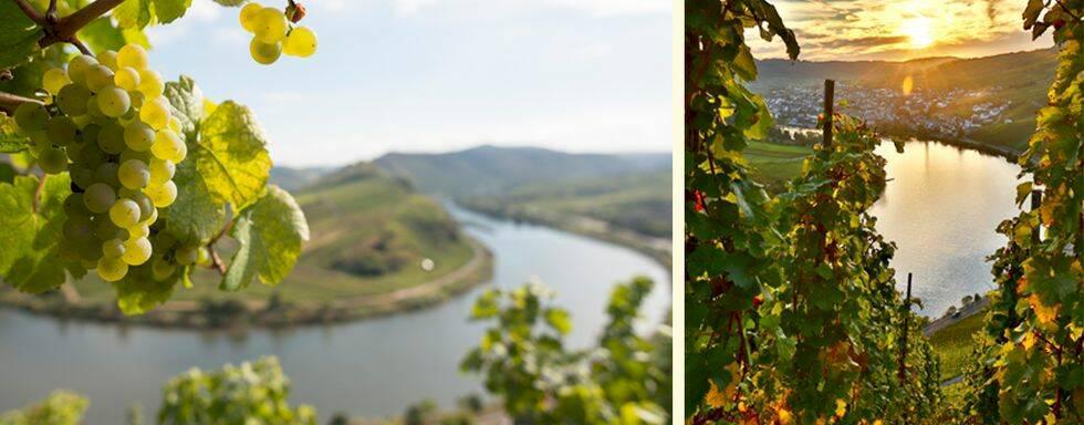 Besök de fantastiska vinregionerna i Tyskland i höst