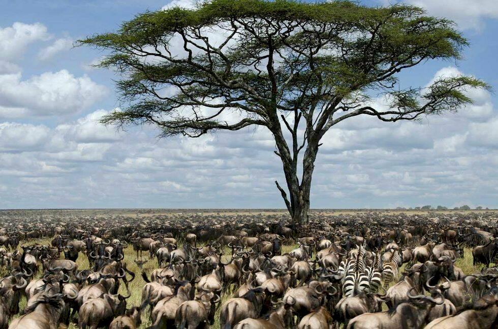 13 fantastiska naturliga underverk i Afrika att skriva upp på din bucket-list