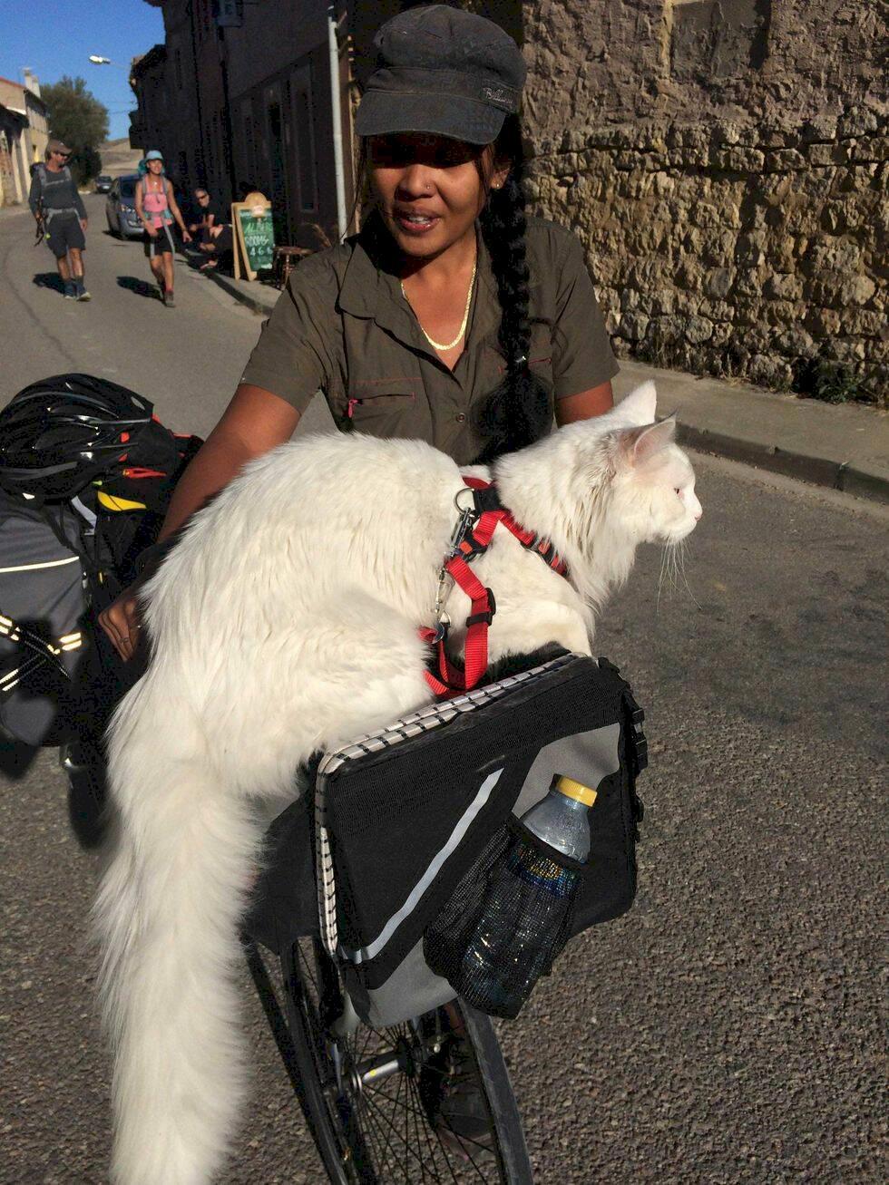 Möt Cezar – världens förmodligen mest beresta katt