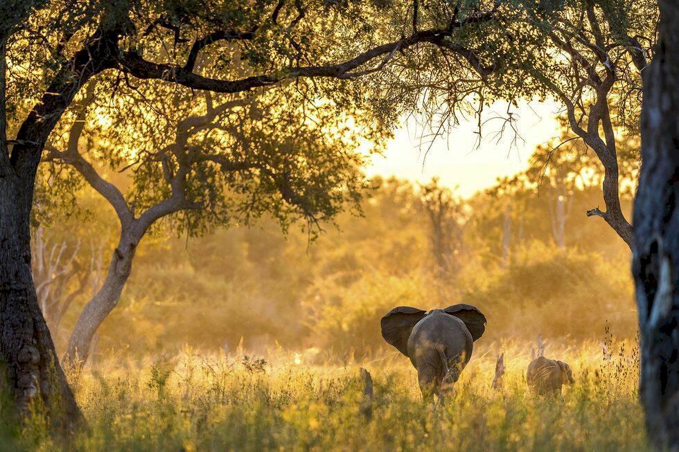 Guide till Luangwa, Zambia