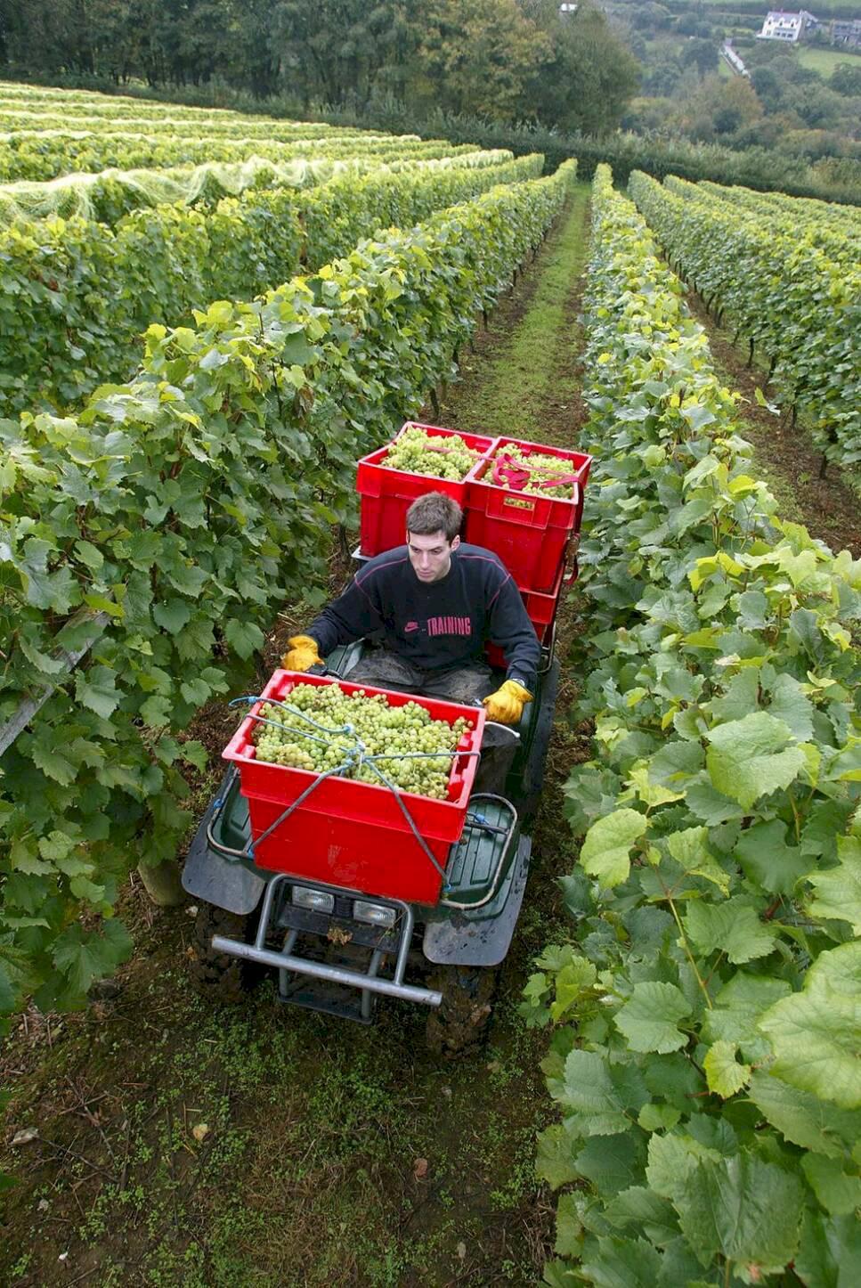 10 vinresor i Europa – vandring, vyer och vinrankor