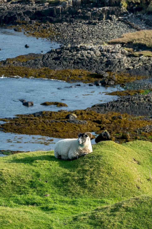 48 timmar på Isle of Skye – får, skotsk tapas och rökig whisky