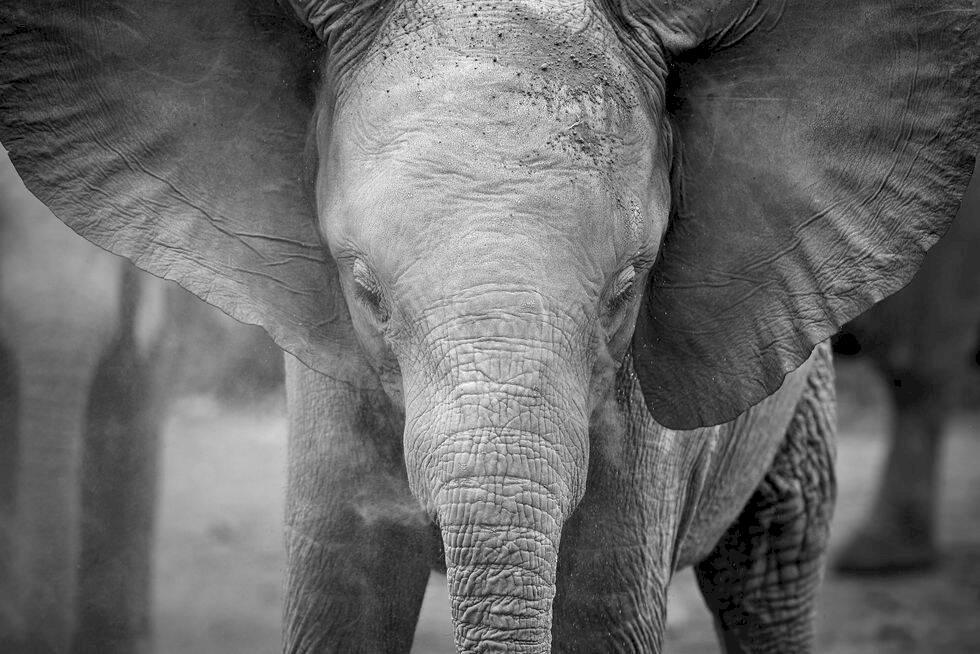 Minskad tjuvjakt på noshörningar i Sydafrika
