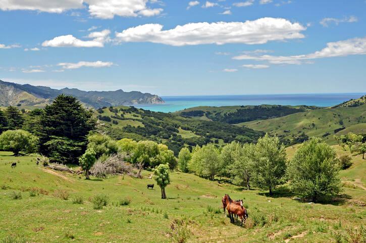 Nya Zeeland - roadtrip i äventyrens land
