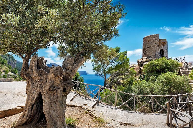 Komplett guide till Mallorca – lokalbons 25 bästa tips