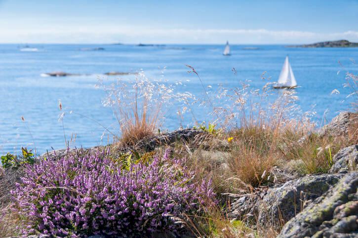 Petters 8 favoriter på Kosteröarna