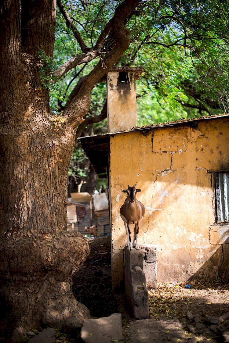 Gambia & Senegal – upptäck kulturen, naturen och musiken