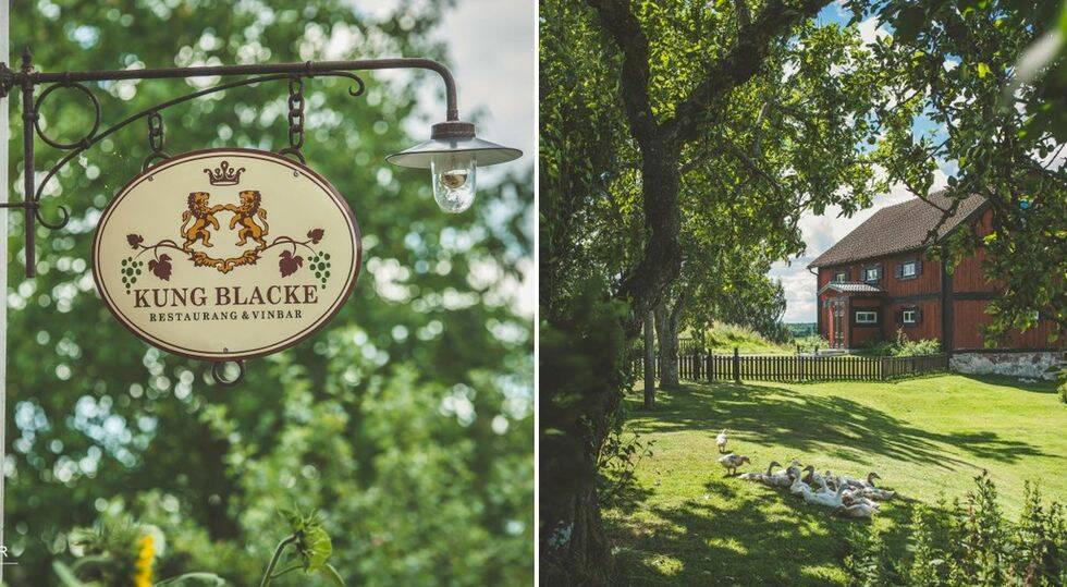 6 vingårdar i Sverige som du kan bo på