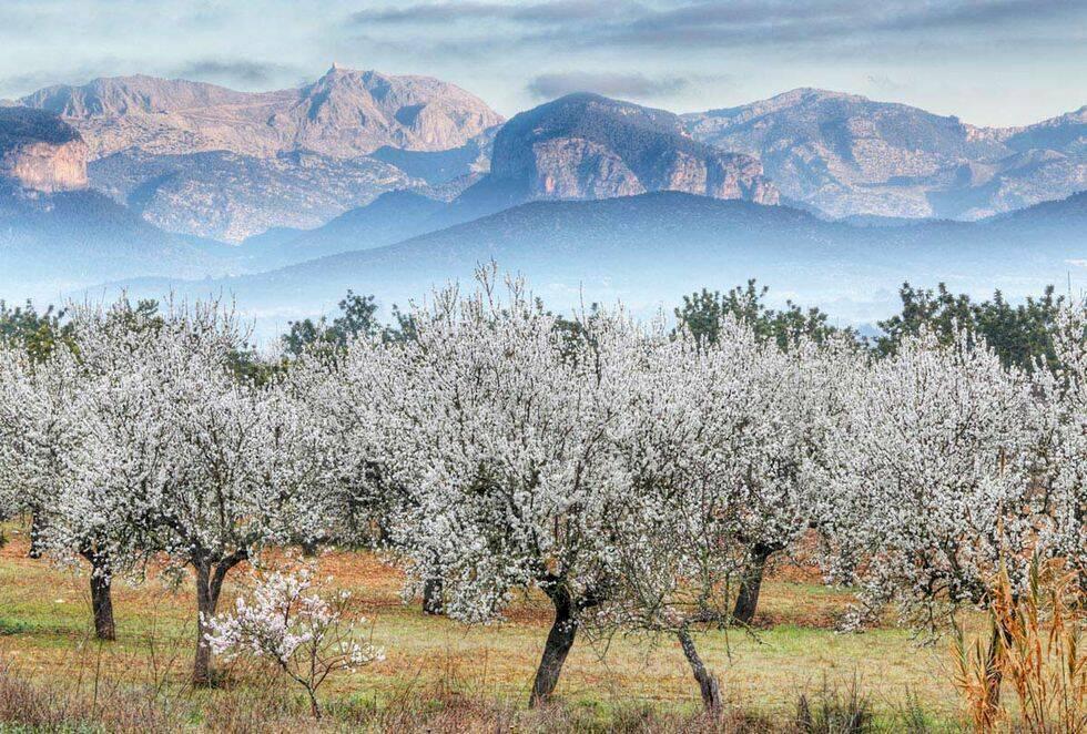 Vårens färgstarkaste resmål – 7 platser med extra blomsterprakt
