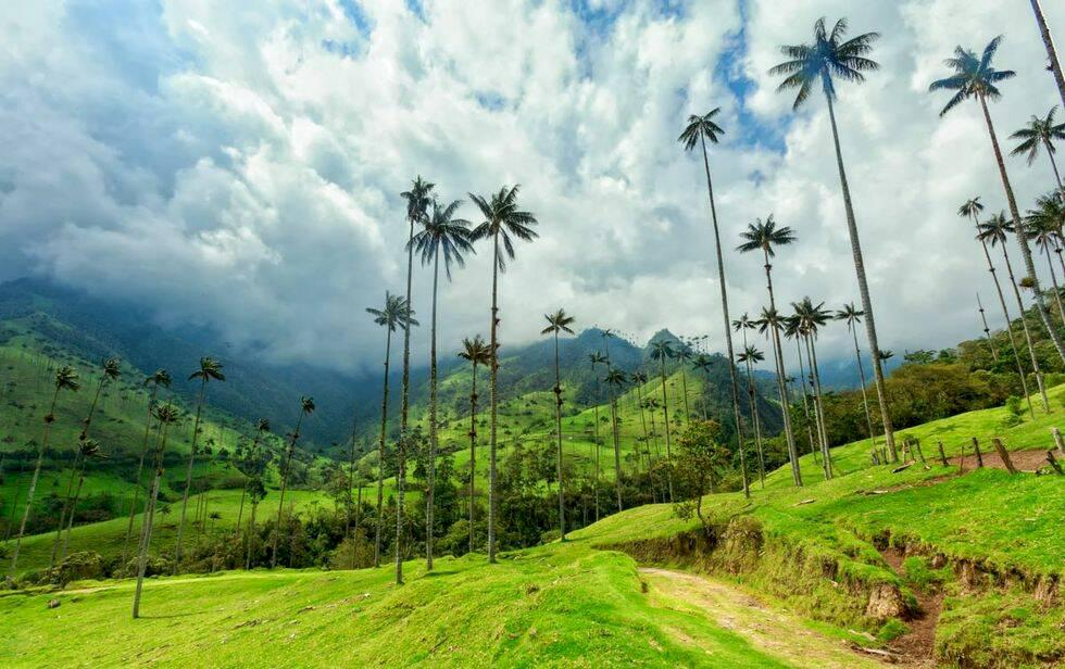 Världens 10 mest instagrammade skogar
