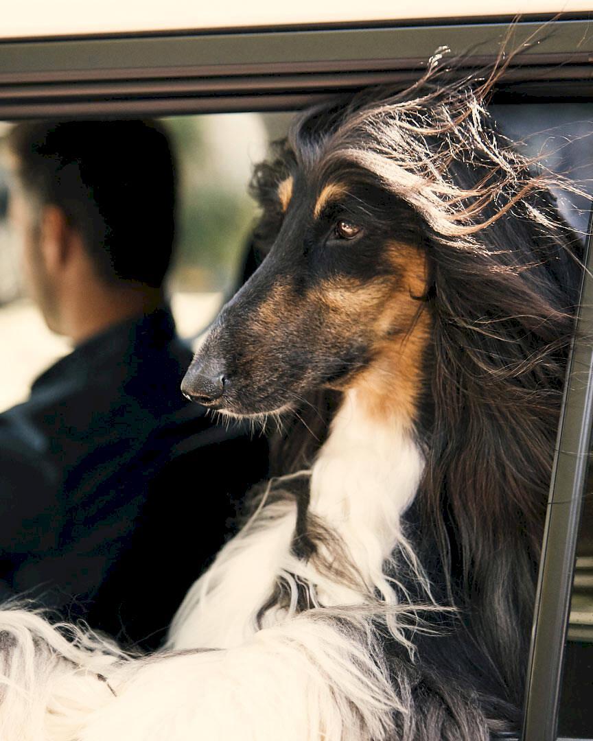 Nya tjänster vill underlätta för ressugna hundägare