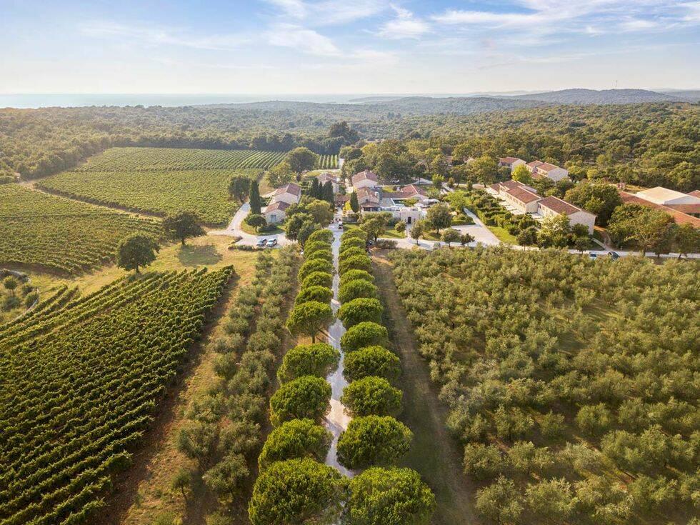 10 vingårdar i Europa som du kan bo på