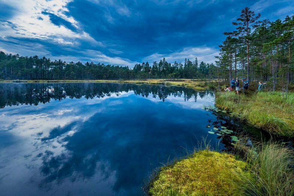 Safari i svenska vildmarken