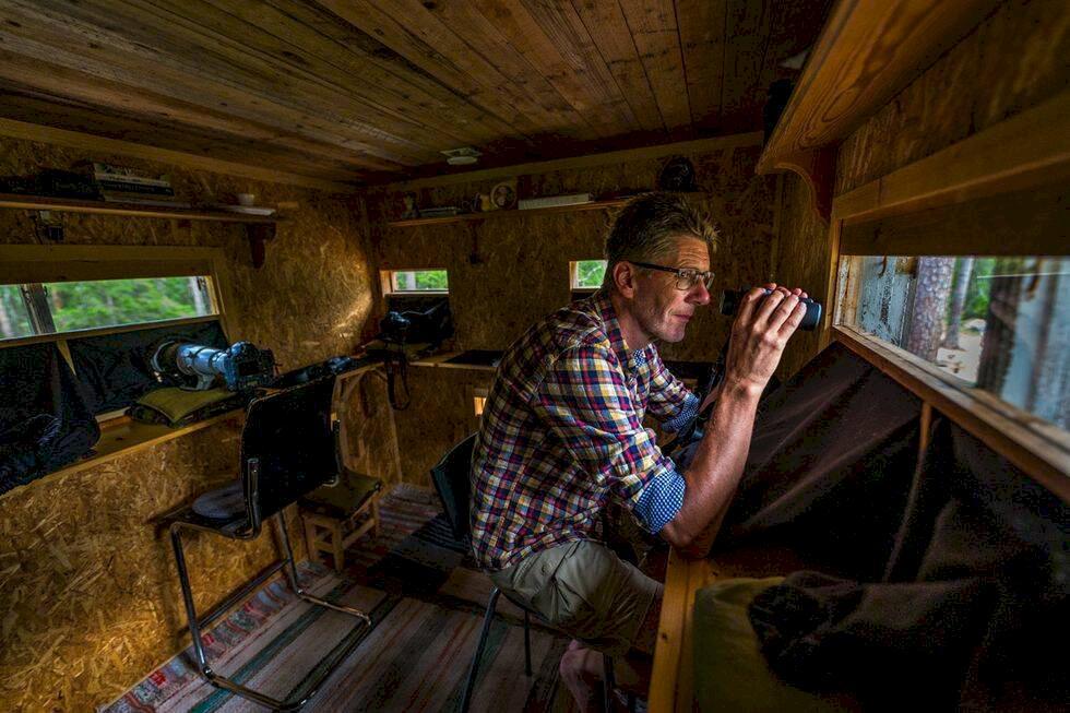 Guide: Vildmarkssafari i Sverige – på spaning efter björn och varg