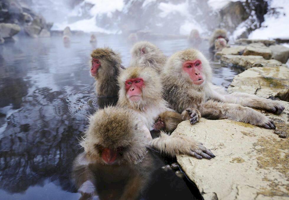Japans bästa bad