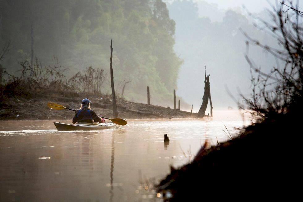 Äta myror? På överlevnadskurs i Thailand med djungel-Dave
