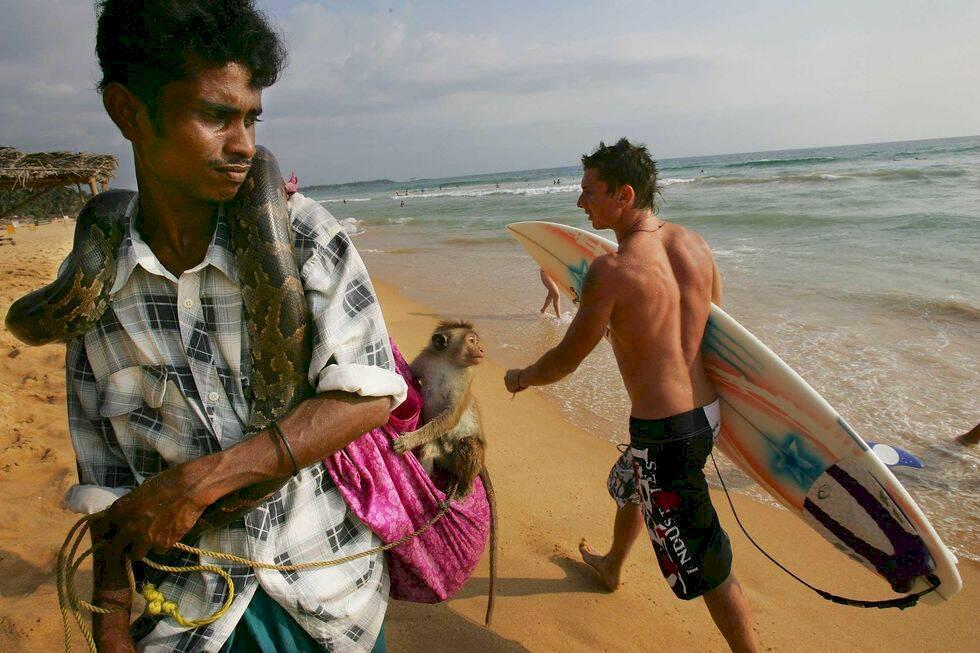 Djur drogas och misshandlas för turisternas bilder