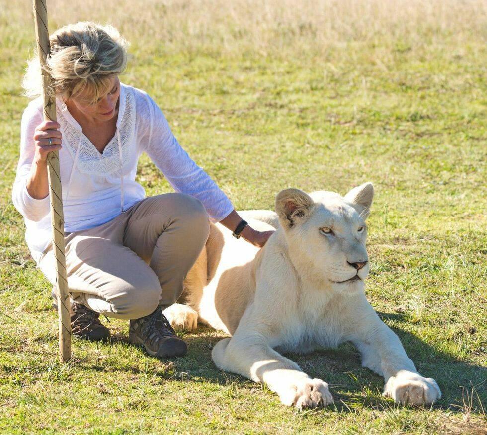 Så luras volontärer att ta hand om lejon som sedan dödas