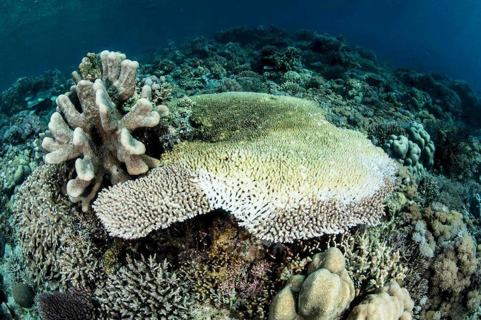 Kan 3D-skrivare vara räddningen för världens korallrev?
