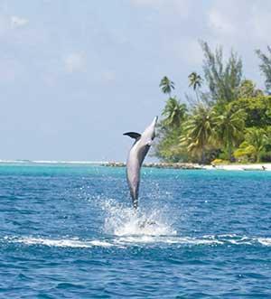 Hawaii kan göra det förbjudet att simma med delfiner