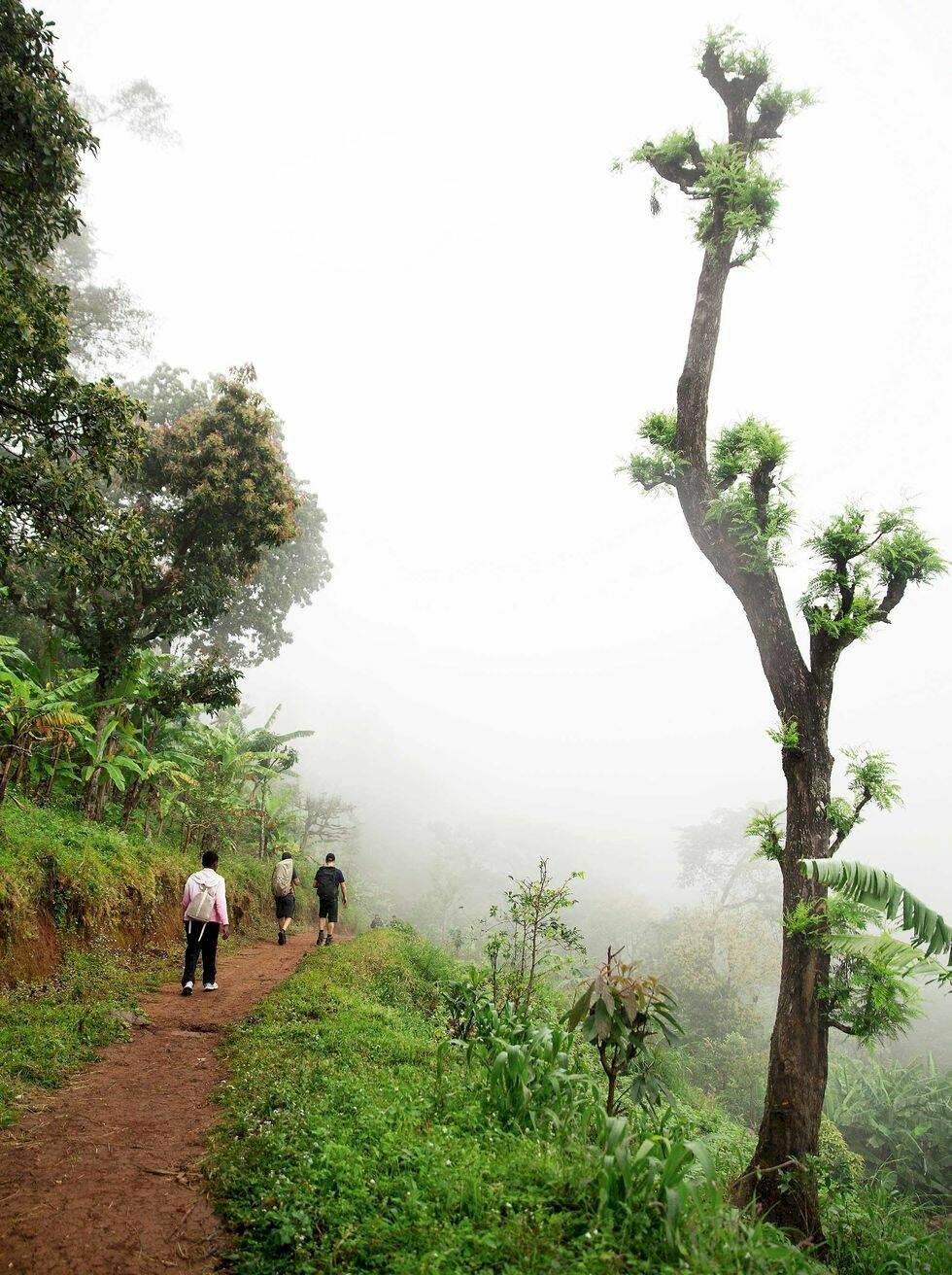 Kilimanjaro: Vägen upp till Afrikas tak