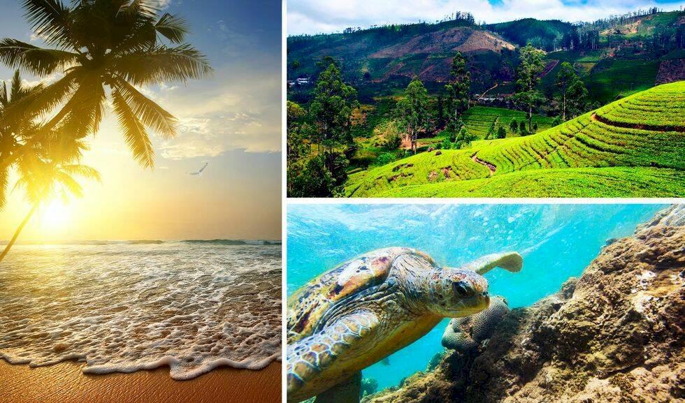 12 skäl till varför du borde upptäcka Sri Lanka