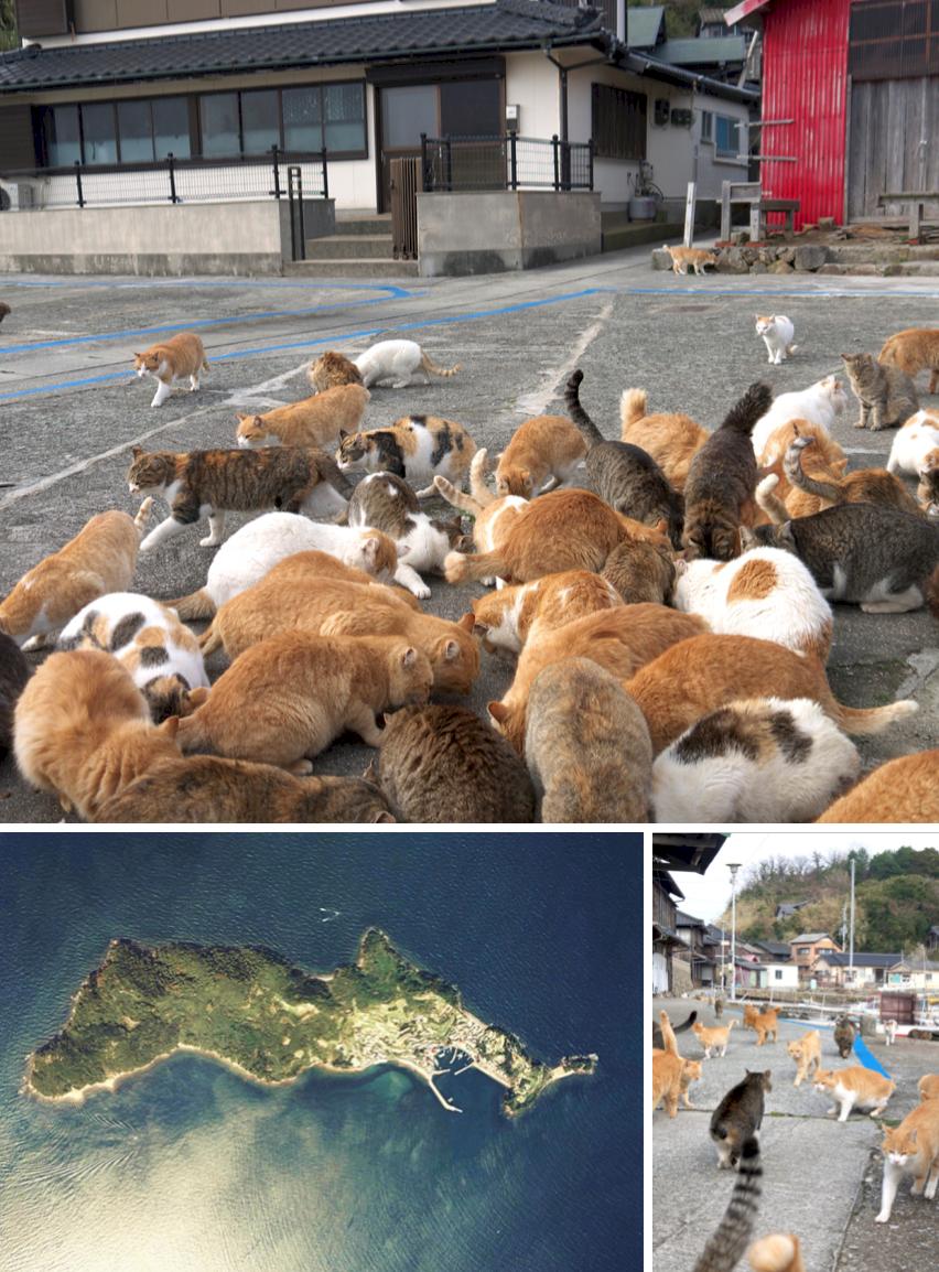 8 resmål i världen för alla som älskar katter