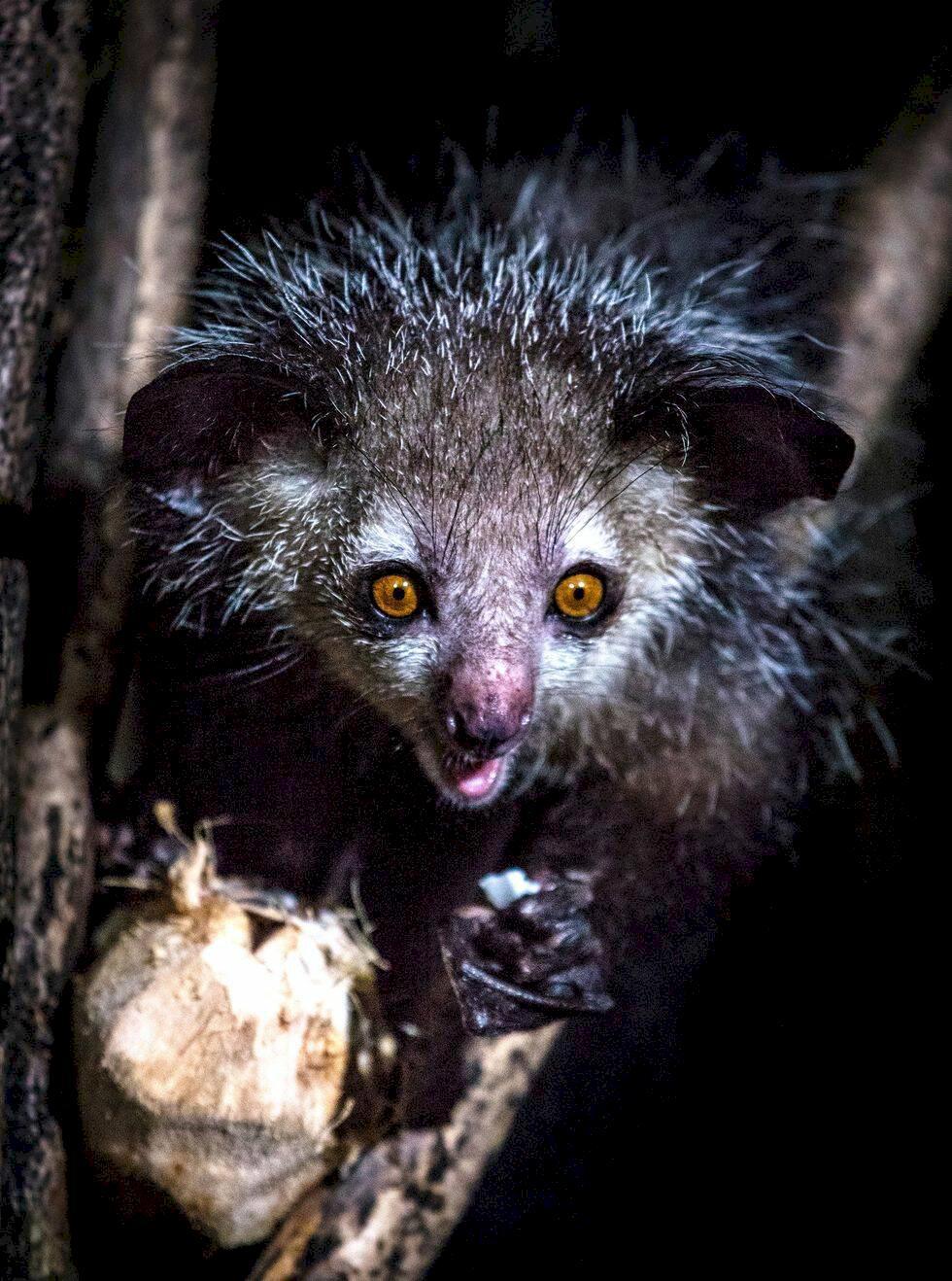 Madagaskar: På besök i Afrikas djurparadis