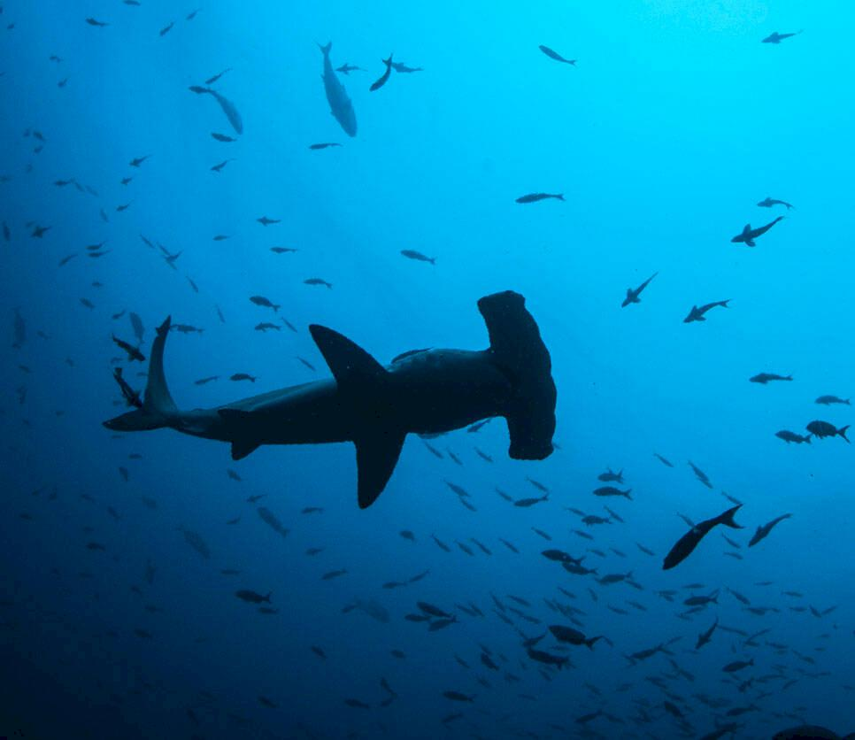 31 anledningar till varför du borde resa till Costa Rica