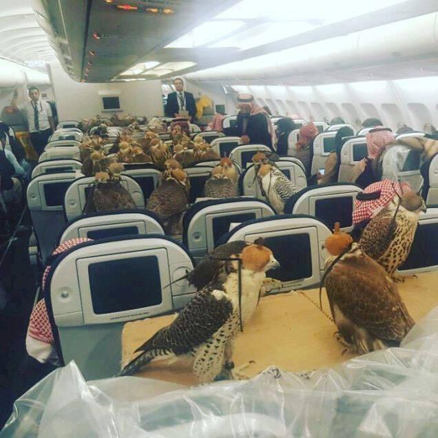 Veckans bisarraste foto? Saudisk prins tog med sig 80 jaktfalkar in i flygplanskabinen