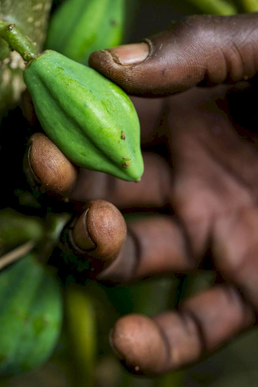 Uganda – äventyr i Afrikas pärla