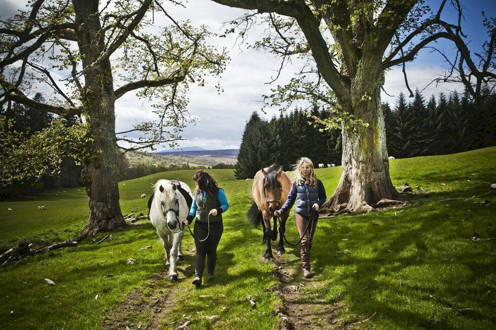 Roadtrip i Skottland bland hedar, öar & whisky