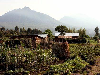 Rwanda - de dimhöljda bergens gorillor