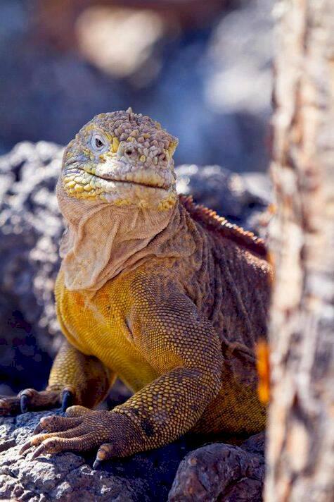 Drömresa i Darwins fotspår på Galápagos