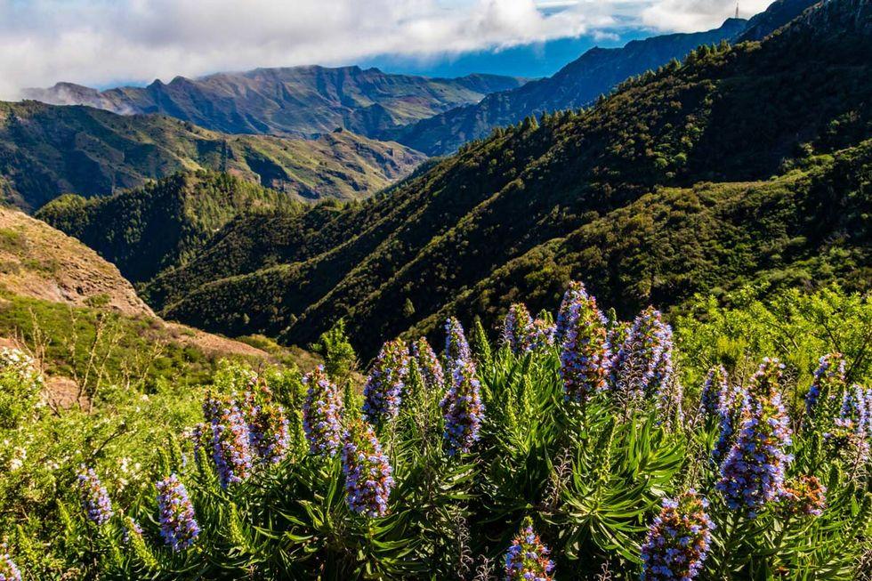 Vandra på Kanarieöarna – 7 dagsvandringar på 7 öar