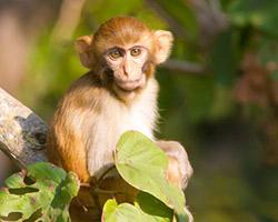 Bästa platserna för att se några av världens mest utrotningshotade djur